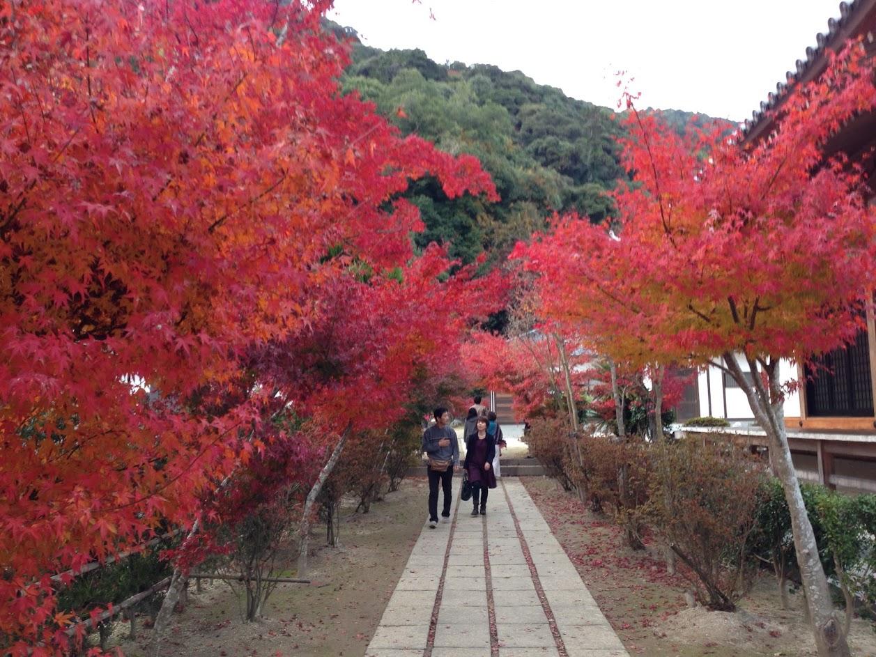 11月の秋の紅葉時期。参道を鮮やかな紅葉が色づいてます。