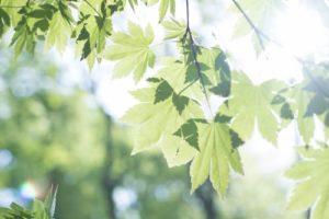 曇り空から日光を浴びたような木々は、淡い光に包まれています。