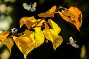 紅葉に虫たちが集まっています