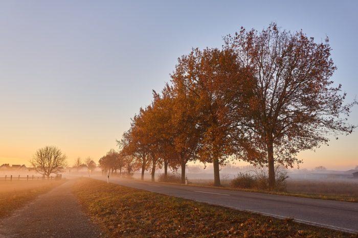 晩秋の立木